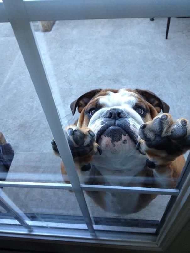perierga.gr - Zώα που θέλουν οπωσδήποτε να μπουν... μέσα!