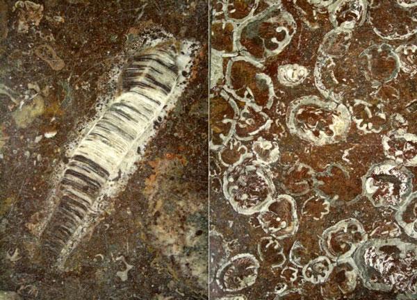 perierga.gr - Απολιθώματα προϊστορικών όντων στα μάρμαρα σταθμού στο Βουκουρέστι!