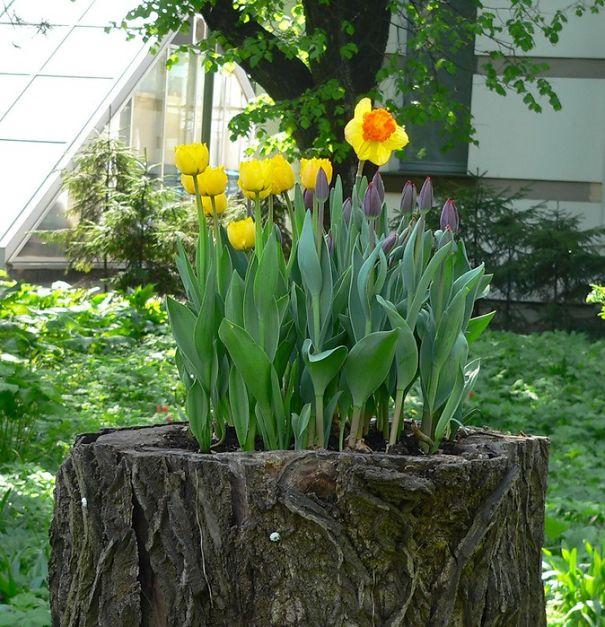 perierga.gr - Κορμοί δέντρων μεταμορφώνονται σε υπέροχες γλάστρες!