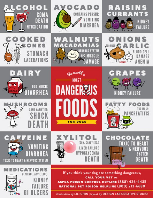 perierga.gr - Οι πιο επικίνδυνες τροφές για τα σκυλιά!