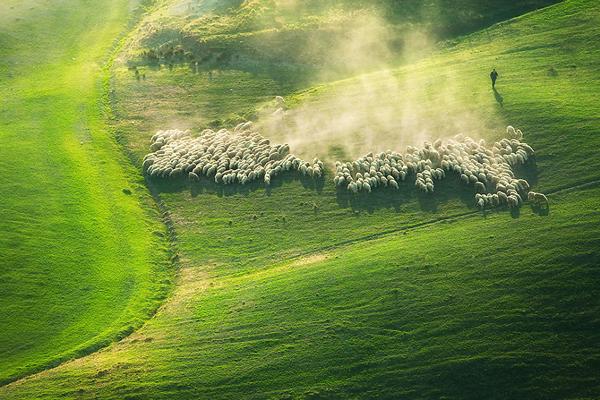 Perierga.gr - Μαγευτικές φωτογραφίες με πρόβατα στα λιβάδια της Τοσκάνης