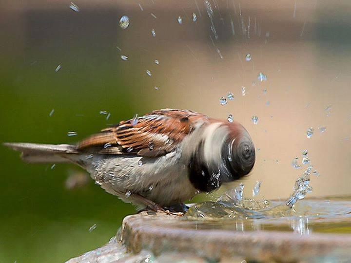 perierga.gr - Τα μπάνια των ζώων στη φύση!