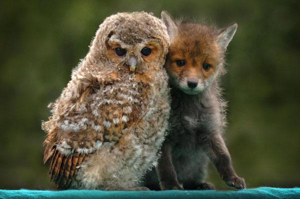 Γιατί τα ζώα κάνουν φίλους όπως και οι άνθρωποι;