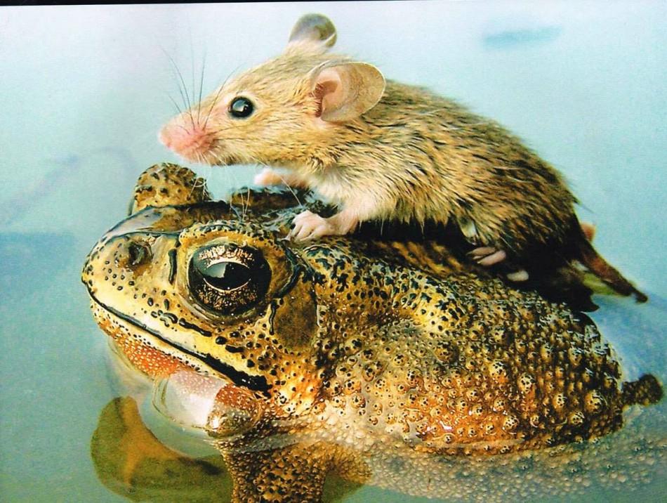perierga.gr - Γιατί τα ζώα κάνουν φίλους όπως και οι άνθρωποι;