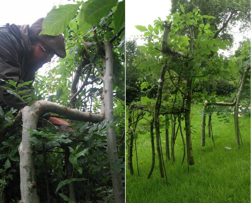 perierga.gr - Δέντρα μεγαλώνουν μέσα σε έπιπλα!