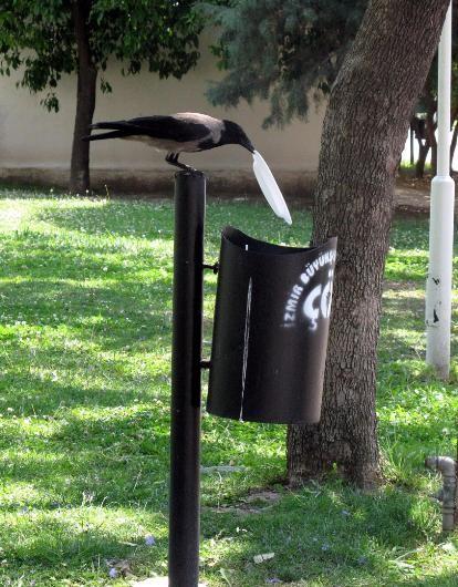perierga.gr - Κοράκι δίνει... σπουδαίο μάθημα καθαριότητας!