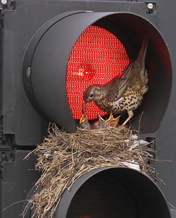 perierga.gr - Φωλιές πουλιών σε απίθανα σημεία!