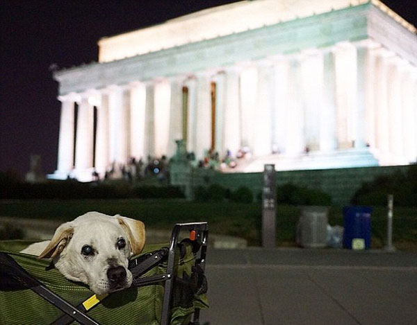 perierga.gr - Συγκινητικό ταξίδι με τον ετοιμοθάνατο σκύλο του!