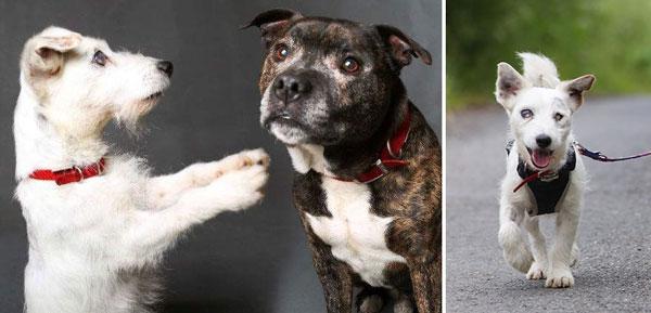 perierga.gr - Τυφλός σκύλος έχει το δικό του οδηγό!