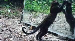 perierga.gr - Πώς βλέπουν τα ζώα τον εαυτό τους στον καθρέφτη;