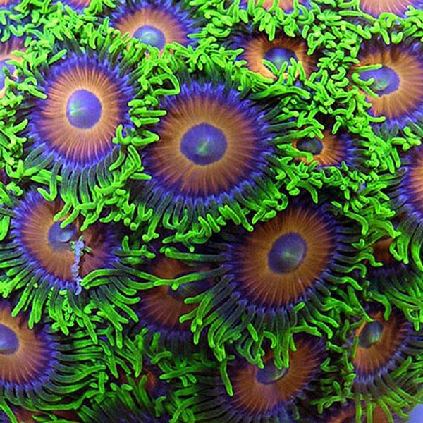 "perierga.gr - Τα ""λουλούδια"" της θάλασσας!"