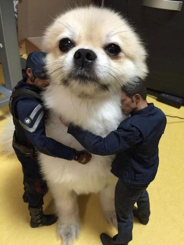 perierga.gr - Σκυλιά μοιάζουν με... γίγαντες!