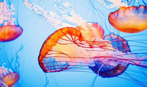 perierga.gr - Χρωματιστές μέδουσες εντυπωσιάζουν!