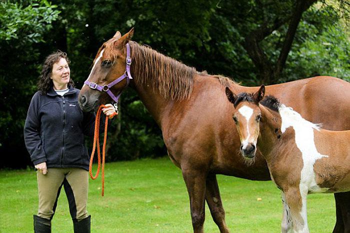 perierga.gr - Άλογο γεννήθηκε με σχήμα... αλόγου στην πλάτη του!