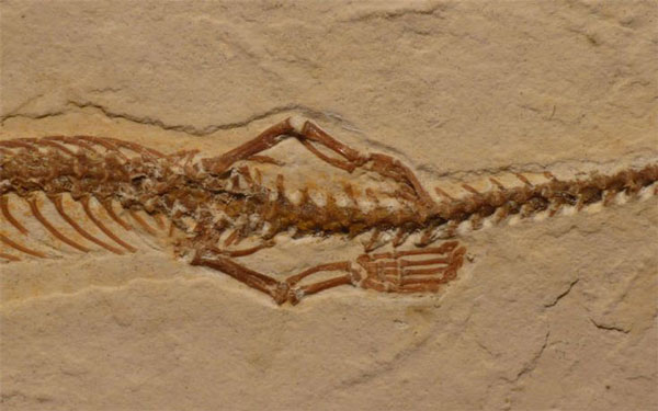 perierga.gr - Βρέθηκε απολίθωμα φιδιού με 4 πόδια