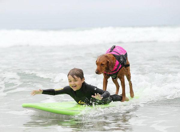 perierga.gr - Σκύλος σέρφερ βοηθά άτομα με αναπηρία!