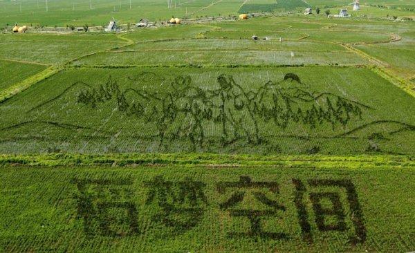 Perierga.gr - Ενυπωσιακές ζωγραφικές παραστάσεις σε καλλιέργειες ρυζιού