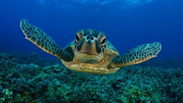 perierga.gr - Η ομορφιά του Μεγάλου Κοραλλιογενούς Υφάλου με τα μάτια μιας θαλάσσιας χελώνας!