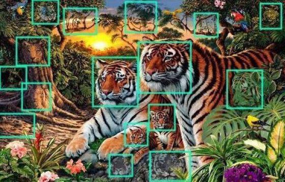 perierga.gr - Πόσες τίγρεις υπάρχουν στη φωτογραφία;