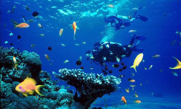 perierga.gr - H εντυπωσιακή ζωή κάτω από την επιφάνεια της θάλασσας!