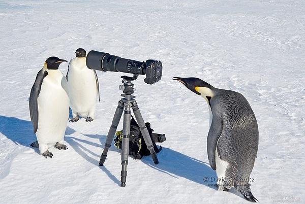 Perierga.gr - Ζώα που θέλουν να γίνουν... φωτογράφοι!