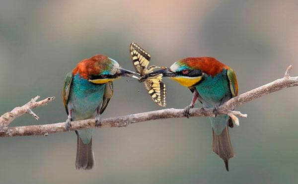 perierga.gr - Ζώα απολαμβάνουν το γεύμα τους!