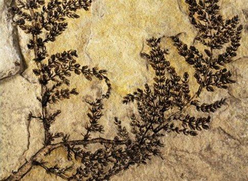 Perierga.gr - Βρέθηκε ένα από τα πρώτα λουλούδια της Γης