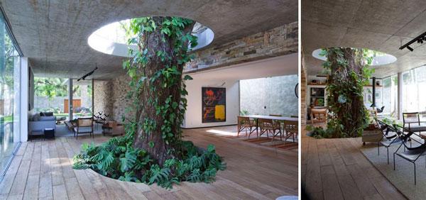 perierga.gr - Αρχιτεκτονική γύρω από ένα δέντρο!