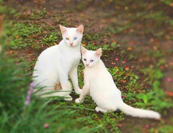 μωρά γάτες γατάκια