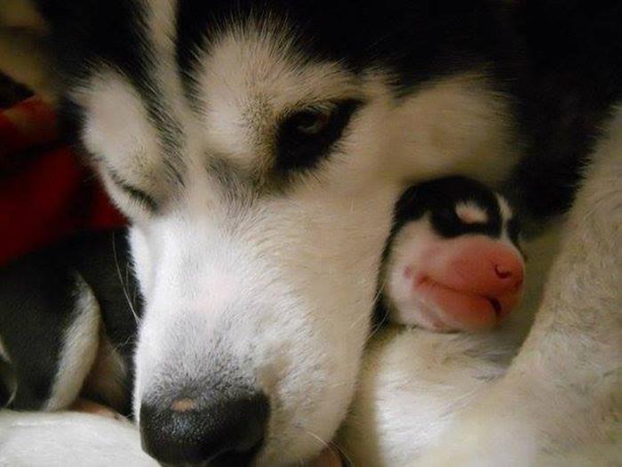 perierga.gr - Αξιoλάτρευτα σκυλιά με τα κουτάβια τους!