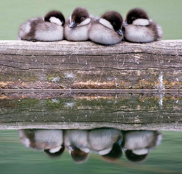 perierga.gr - Πουλιά αγκαλιασμένα στο φακό!