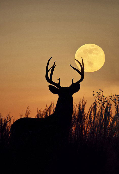 perierga.gr - Φιγούρες ζώων με φόντο την ανατολή & δύση του ήλιου!