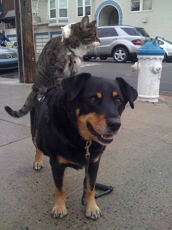 perierga.gr - Ζώα πάνω σε άλλα ζώα!