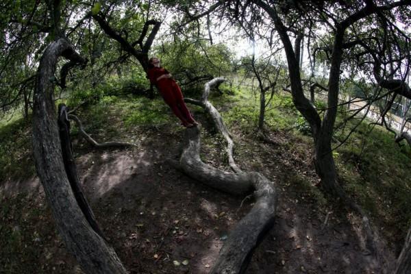 perierga.gr - Δέντρο 220 ετών εκτείνεται σε 10 στρέμματα!