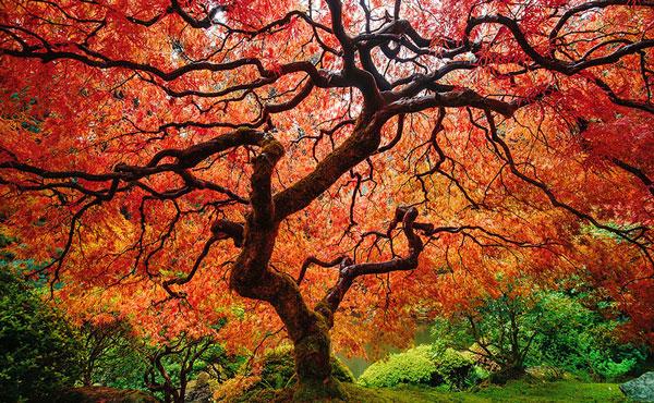 perierga.gr - Οι εκπληκτικές μεταμορφώσεις της φύσης το φθινόπωρο!