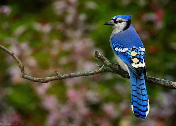 perierga.gr - Γιατί το μπλε είναι σπάνιο χρώμα στα ζώα;
