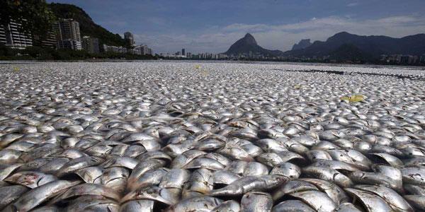 perierga.gr - Βροχή... ψαριών στην Ονδούρα!