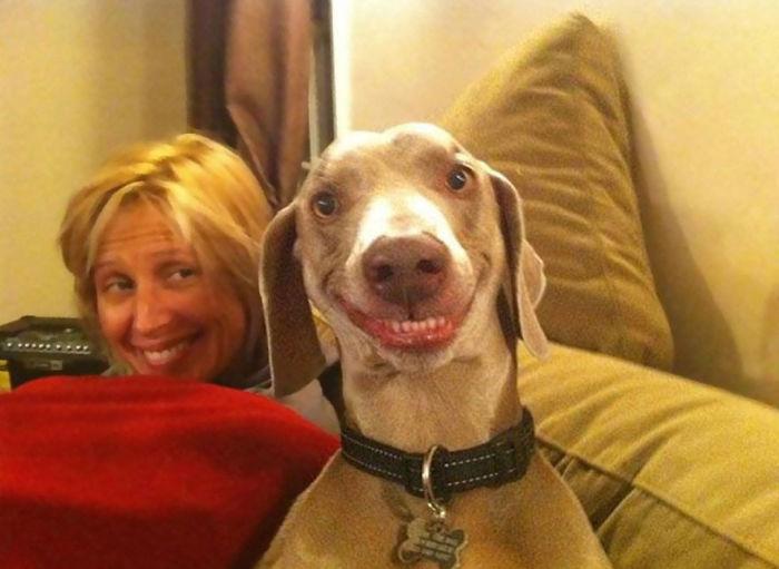 perierga.gr - Χαρούμενα σκυλιά... χαμογελούν στο φακό!
