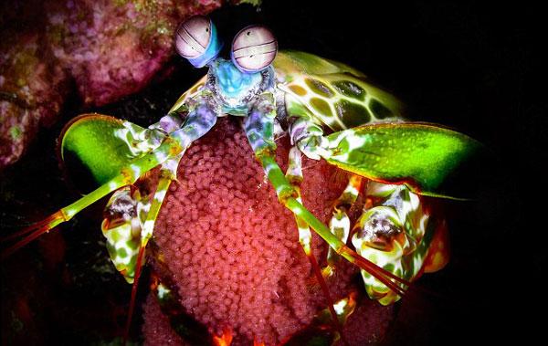 perierga.gr - Τα υπέροχα χρώματα των πλασμάτων που ζουν στο βυθό!