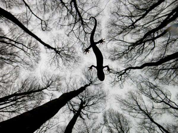 "perierga.gr - Οι νικητές του διαγωνισμού ""Φωτογράφος Άγριας Ζωής"" για το 2015"