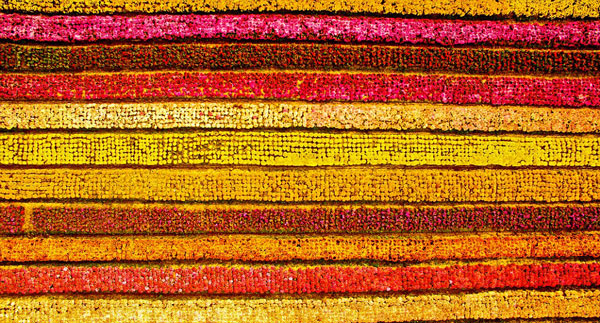 perierga.gr - Πανέμορφα λιβάδια με χρυσάνθεμα στη Σαγκάη!