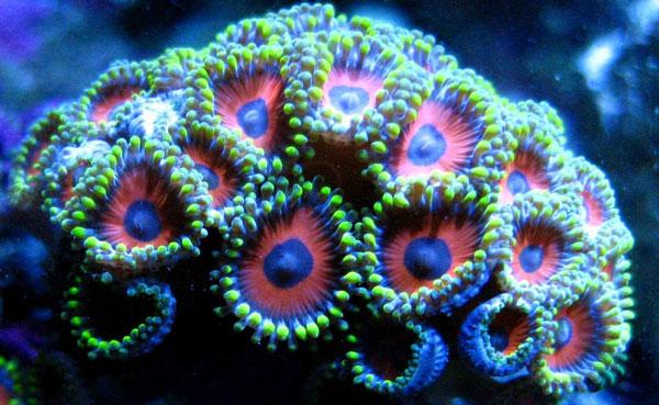 perierga.gr - Τα κοράλλια «πεθαίνουν πασαλειμμένα με αντηλιακό»!
