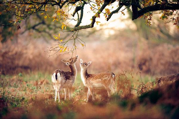 perierga.gr - Ζώα χαίρονται το φθινόπωρο!