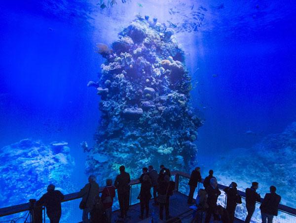 perierga.gr - Ταξίδι στα βάθη του μεγάλου κοραλλιογενούς υφάλου!