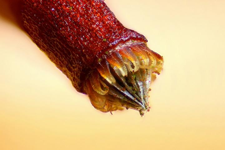 perierga.gr - Εντυπωσιακές εικόνες στο μικροσκόπιο!