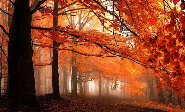perierga.gr - Εντυπωσιακό φθινόπωρο στη Μοραβία