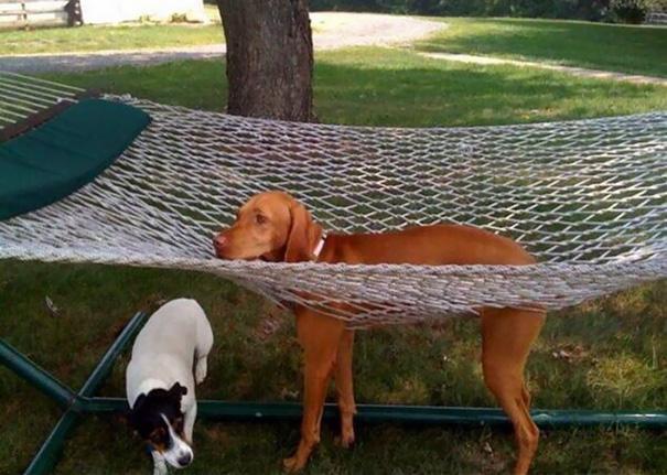 perierga.gr - Σκυλιά που μετάνιωσαν αμέσως για τις πράξεις τους...