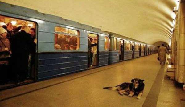 perierga.gr - Τα έξυπνα αδέσποτα των ρωσικών τρένων!