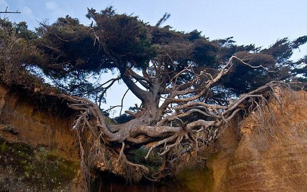 perierga.gr - Δέντρο αψηφά το νόμο της βαρύτητας!