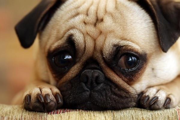 perierga.gr - Μπορούν τα ζώα να αυτοκτονήσουν;